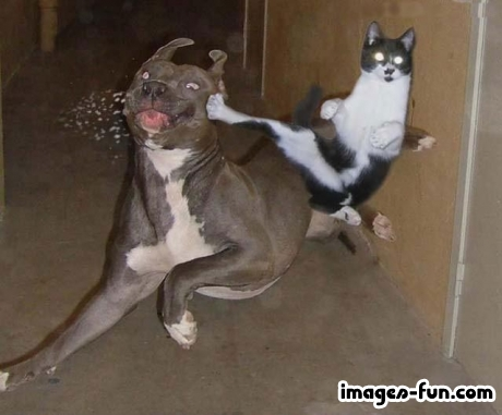 Kung-Fu chiench...
